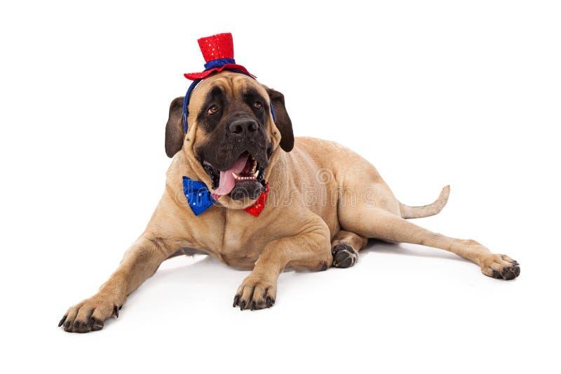 Grappige Mastiff op Vierde van Juli royalty-vrije stock foto