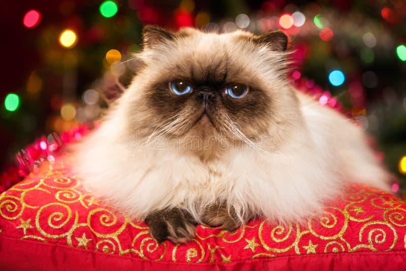 Grappige Perzische kat die op een Kerstmiskussen liggen met bokeh royalty-vrije stock foto's