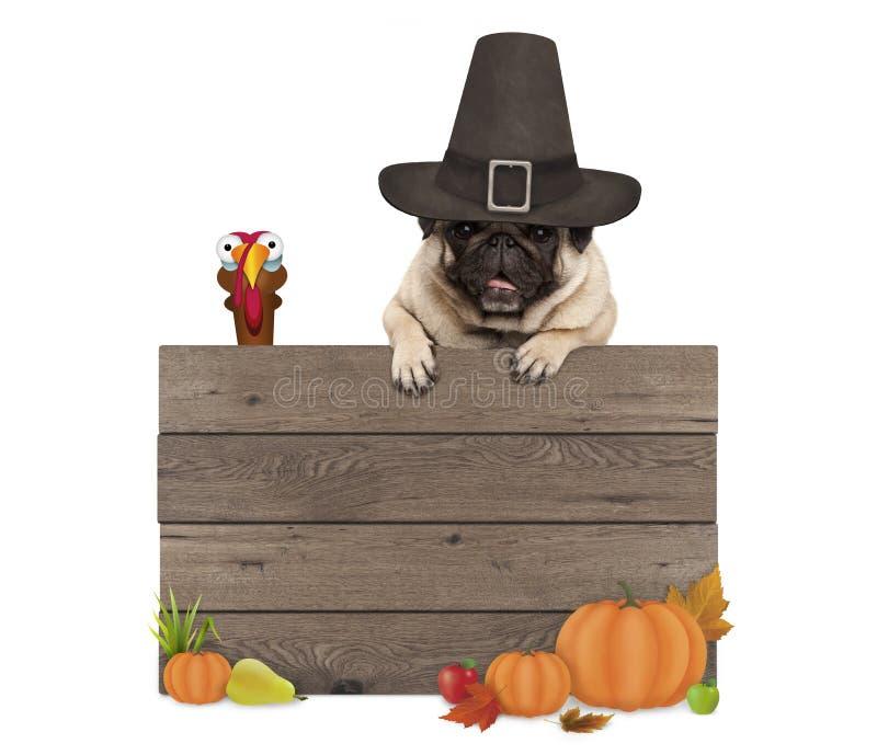 Grappige pug hond die pelgrimshoed dragen voor Thanksgiving day, met leeg houten teken en Turkije stock fotografie
