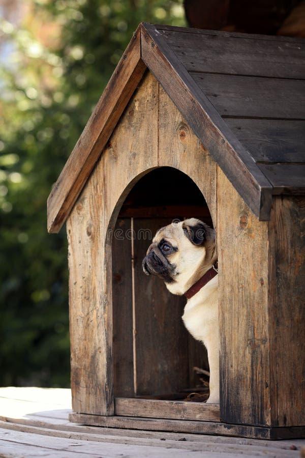 Grappige pug hond in het hondhuis stock afbeelding