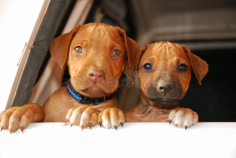 Grappige puppygezichten stock foto's