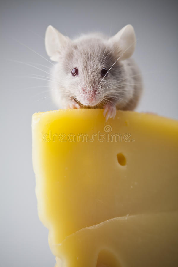 Grappige rat royalty-vrije stock afbeelding