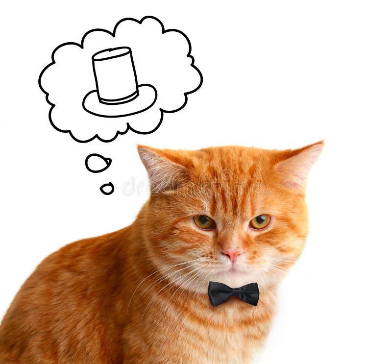 Grappige Rode Cat Gentleman die op een Hoed dromen stock afbeeldingen