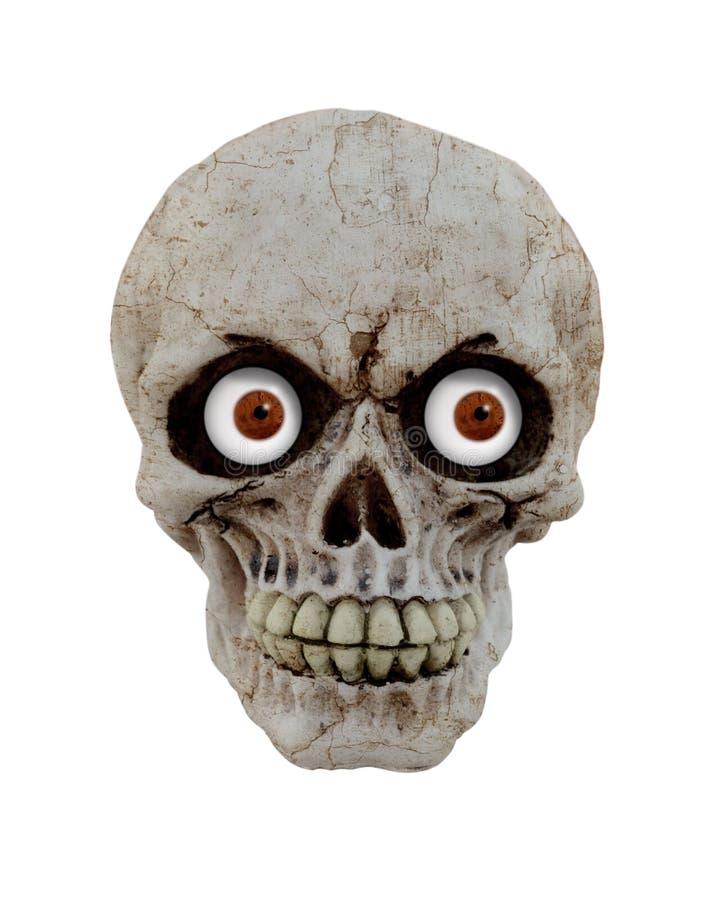 Grappige schedel stock fotografie