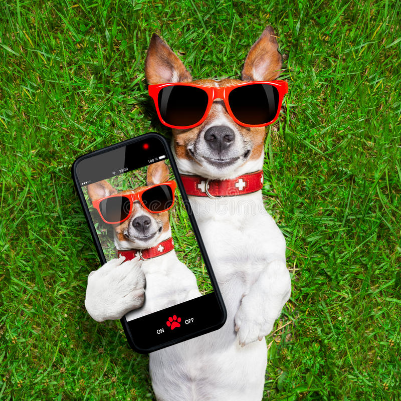 Grappige selfiehond royalty-vrije stock foto