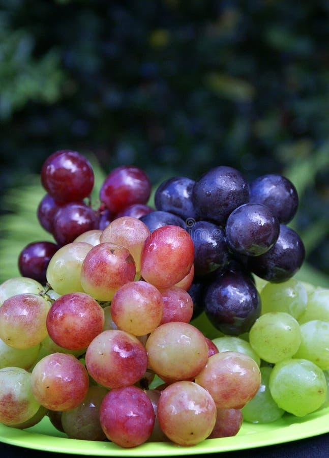Graps colorés photo stock