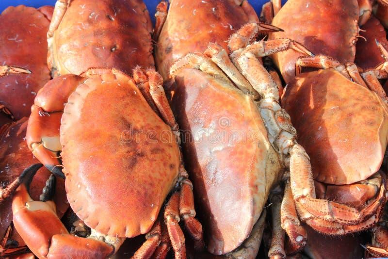 Grapsus ROUGE de Crabe-Grapsus de ROCHE photos stock