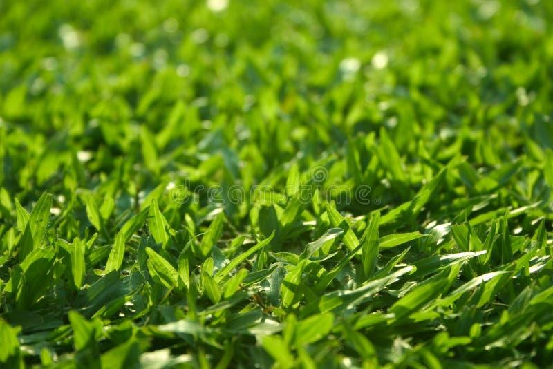 Gras stock foto