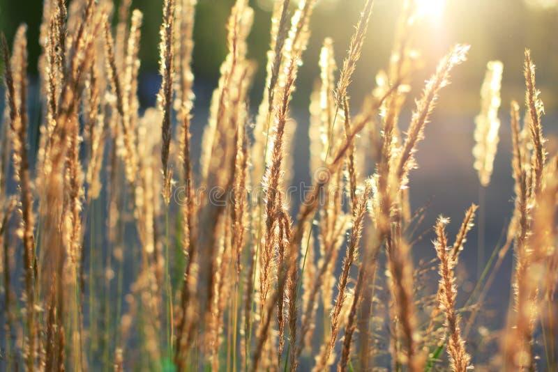 Gras lizenzfreies stockbild