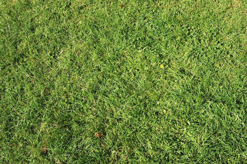 Gras #3 stock foto's