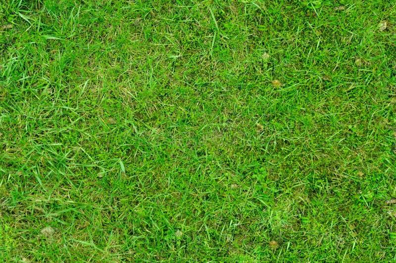 Gras 3 stock foto's