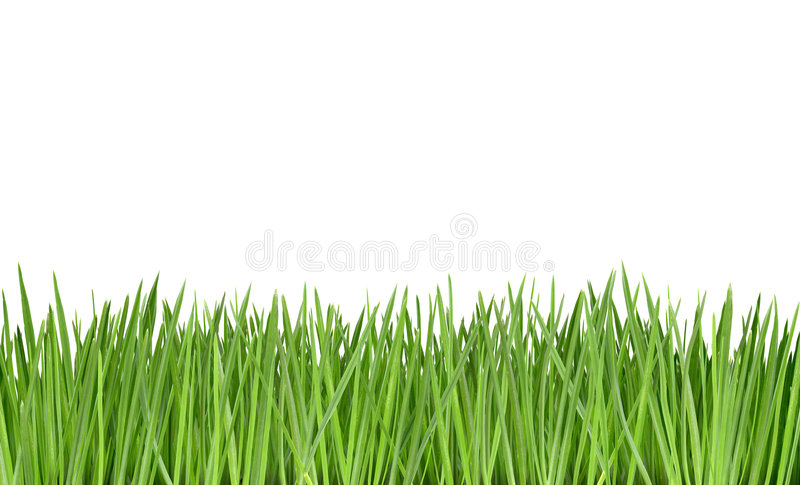 Gras stockbilder