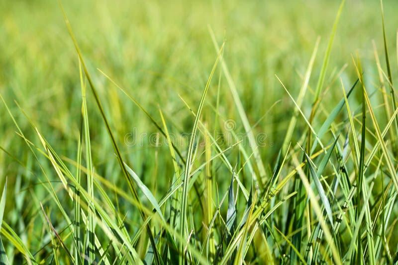 Download Gras stock foto. Afbeelding bestaande uit vers, gazon - 54087968