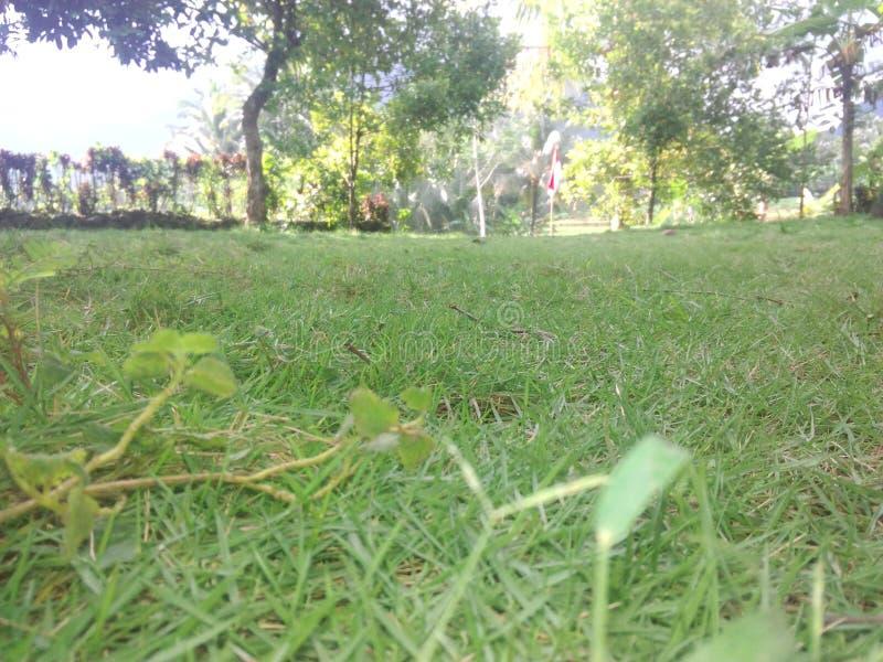 Gras stock fotografie