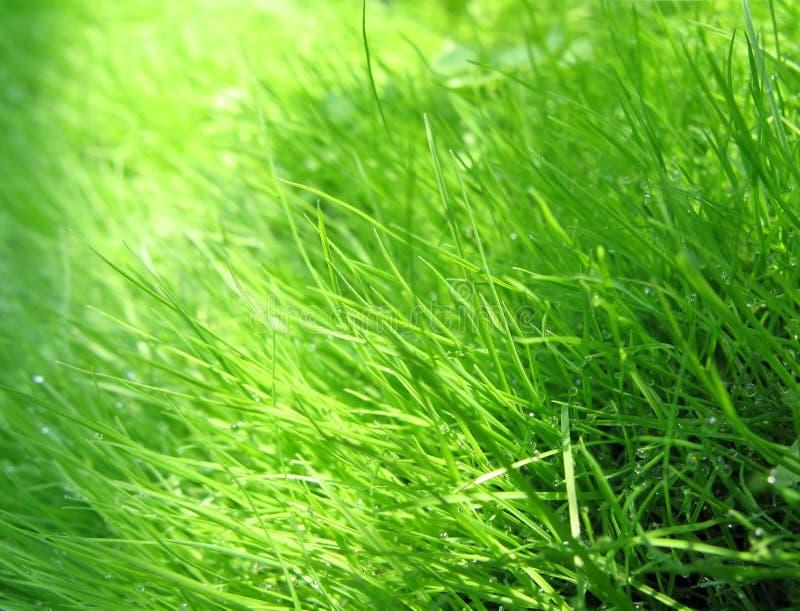 Gras & dauw stock foto