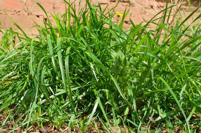 Gras auf braunem Sand stockbilder