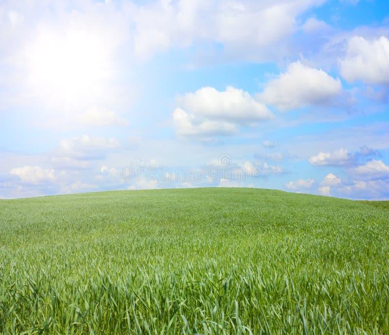 Gras auf dem Hügel lizenzfreie stockfotos