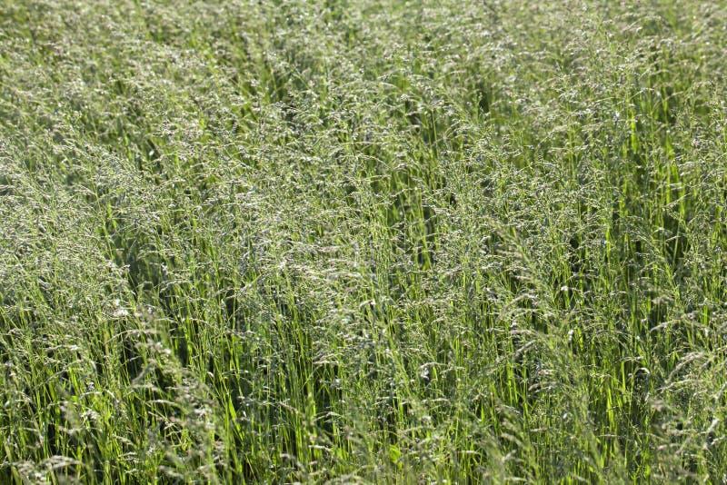 Gras auf einer Wiese stockfotos
