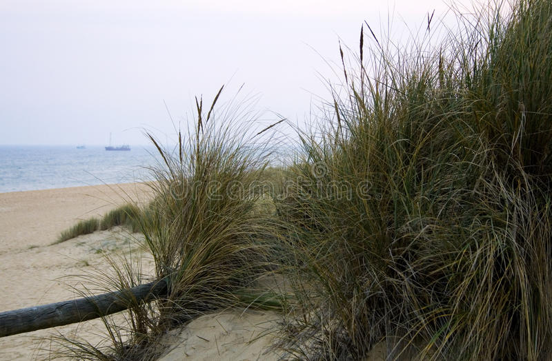 Gras auf Sandy Beach im See-Eingang, Victoria, Australien lizenzfreie stockfotografie