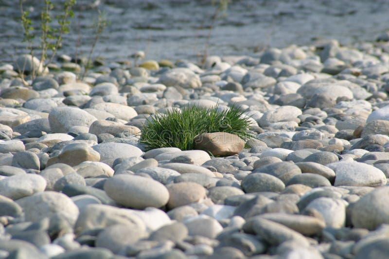 Gras auf Steinen lizenzfreie stockfotografie