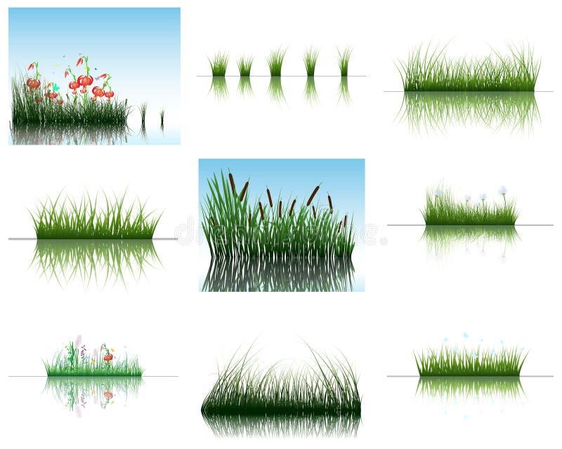 Gras auf Wasser stock abbildung