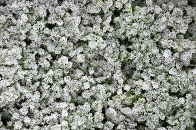 Gras bedeckte mit einer Schicht Frost, Draufsicht stockfotografie