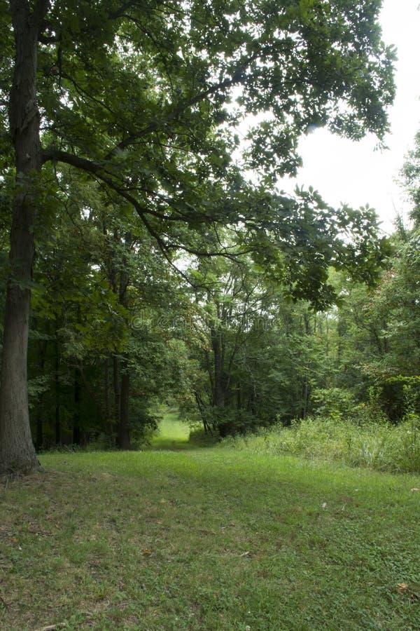 Gras bedeckte Weg durch Wald stockbilder