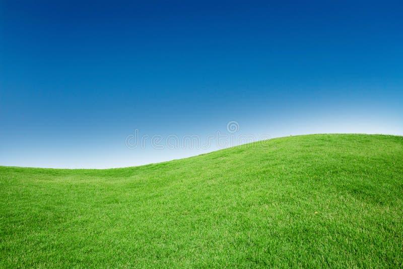 Gras-Beschaffenheit mit freiem Raum Copyspace gegen blauen Himmel lizenzfreies stockbild