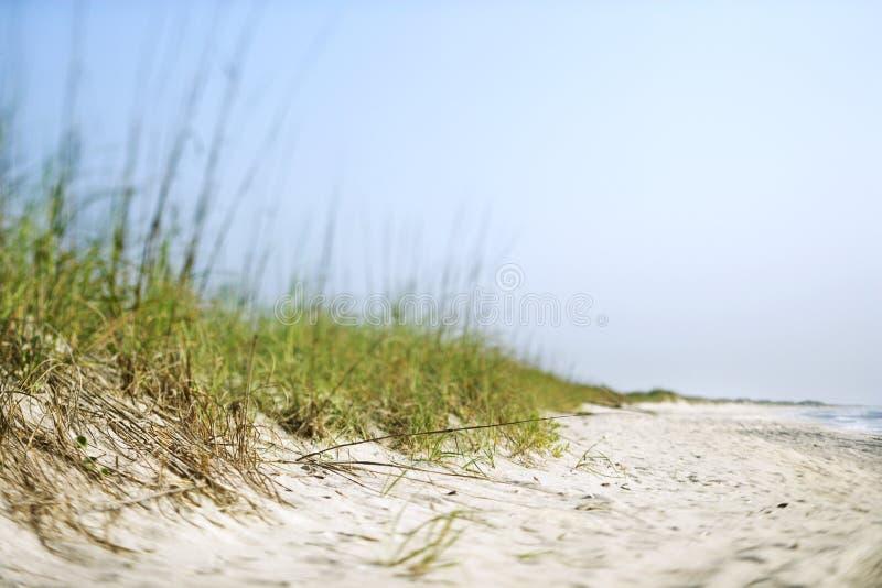 Gras bij strand. stock foto's