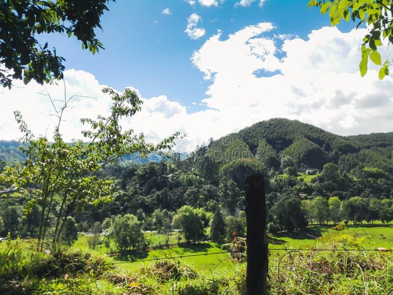 Gras, bomen en bergen van de hemel royalty-vrije stock fotografie
