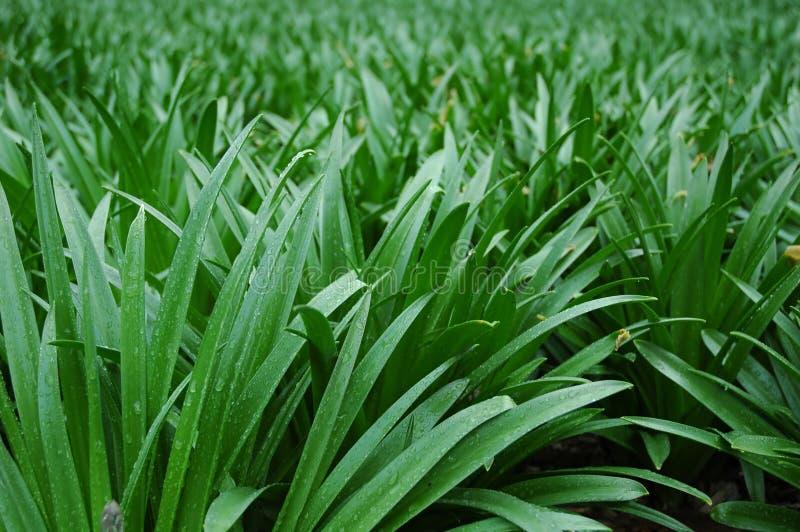 Gras - Close-up stock fotografie