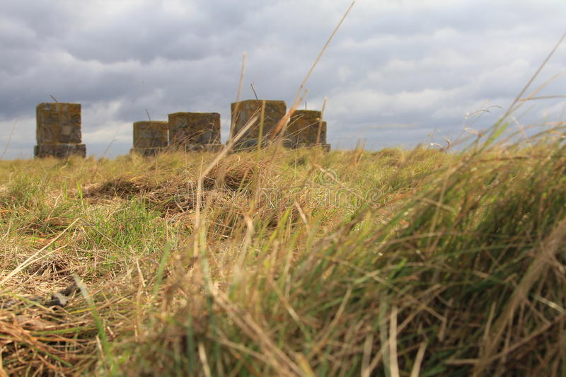 Gras, clouds and stone blocks. Frog perspective, landscape royalty free stock image