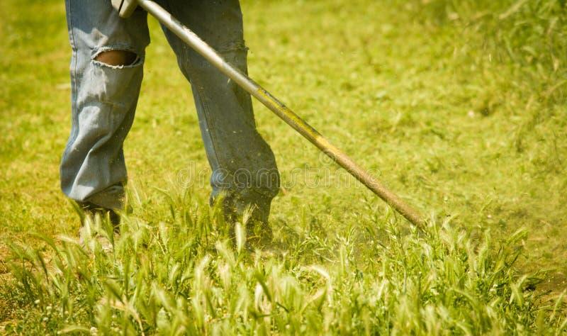 Gras, das in den Jeans mäht lizenzfreies stockbild