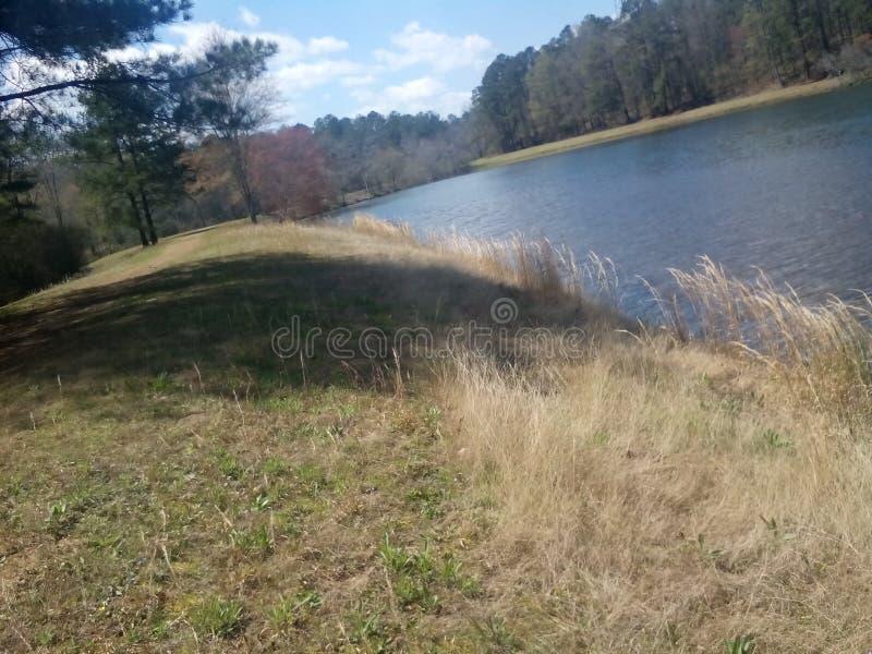 Gras, das in den Wind fließt lizenzfreies stockfoto
