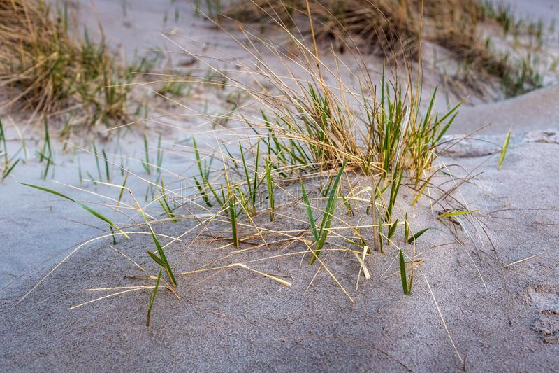 Gras, das durch den Sand wächst lizenzfreies stockbild