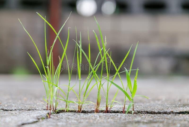 Gras, das durch Sprung im Beton wächst stockfotografie