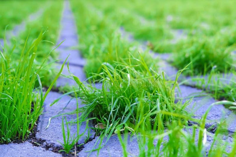 Gras, das durch Steinblöcke der Fliesen-Bahn in einem Park bricht Licht der untergehenden Sonne auf der Pflasterung, die Motivati stockfotografie