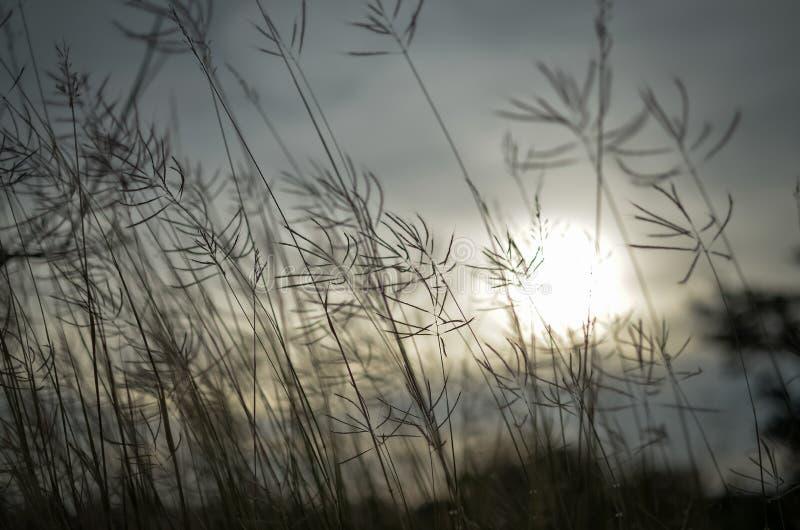 Gras dat in de wind slingert stock foto's