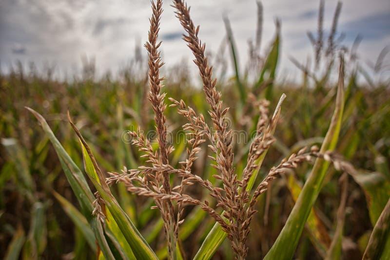 Gras in de het landschapsaard van het gebiedsdaglicht landbouw stock afbeeldingen