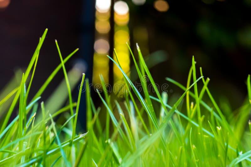 Gras in de tuin, in zonlicht Close-up van een groen gazon stock foto's
