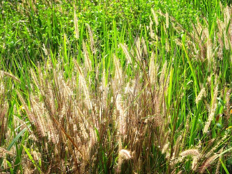 Gras in de verse tuin en de aard stock afbeelding