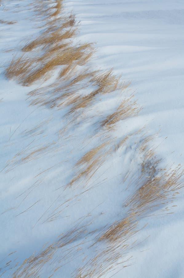 Gras in de wind geblazen sneeuw royalty-vrije stock afbeeldingen