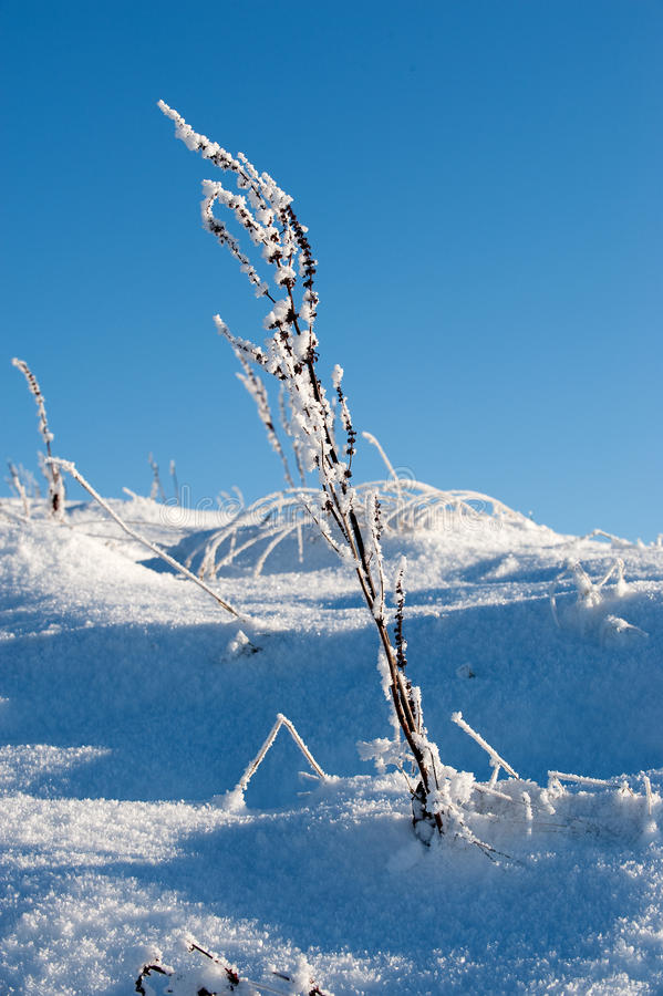 Gras in de winter stock foto
