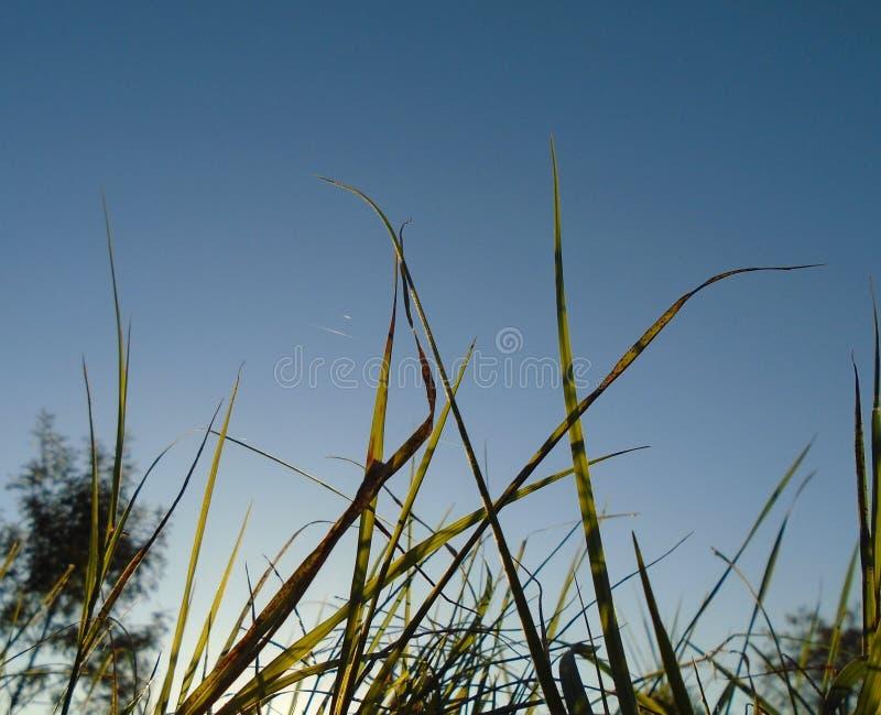 Gras in de zon stock afbeeldingen