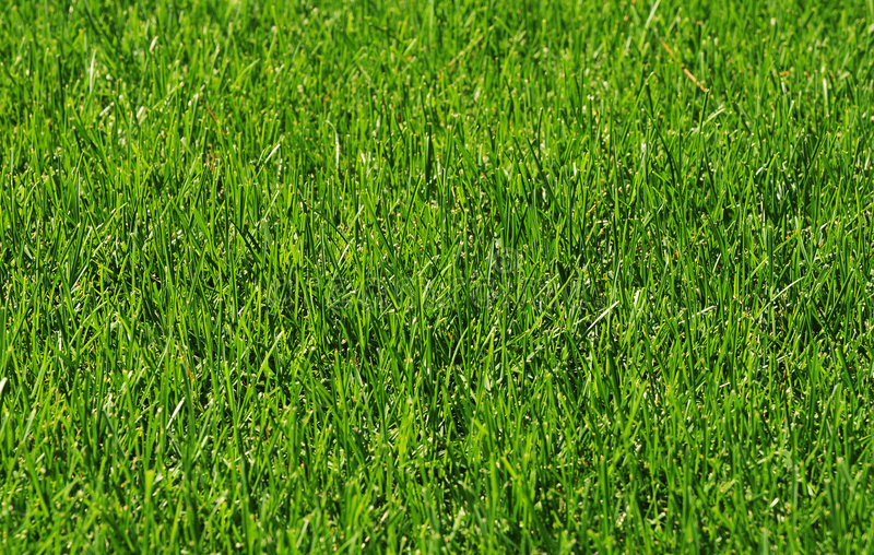 Gras in de zonneschijn royalty-vrije stock afbeeldingen
