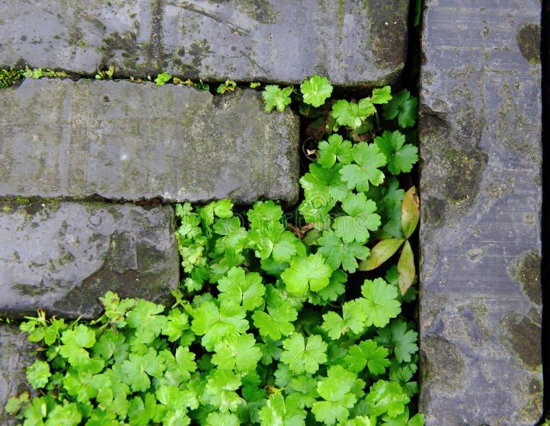 Gras in den Sprüngen stockfotografie