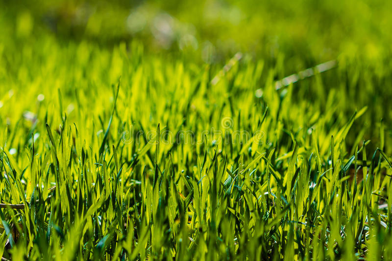 Gras in der Sonne stockfotografie
