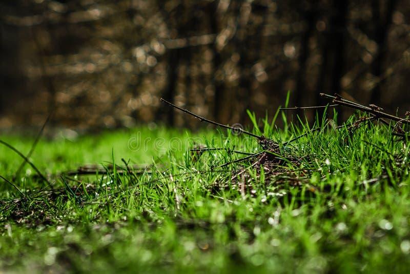 Gras in der Sonne lizenzfreies stockbild