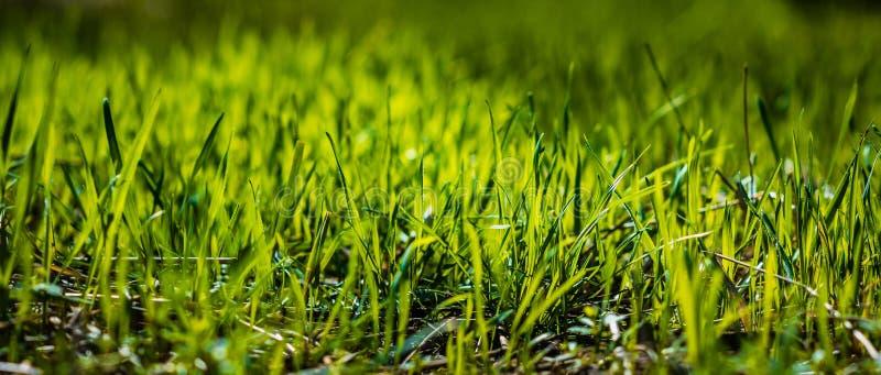 Gras in der Sonne stockfotos