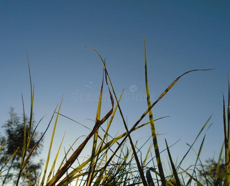 Gras in der Sonne stockbilder